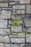 Cemetery Wall and moss closeup Stock Photography