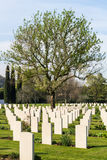 Cemetery of war. An international war cemetery near the city of Florence where lie some of the fallen of World War II Royalty Free Stock Photos