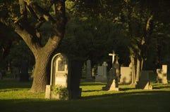 Cemitério com as árvores verdes frescas imagem de stock royalty free