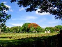 Cemitério da guerra de Kanchanaburi Fotos de Stock Royalty Free