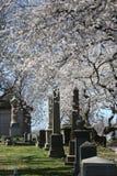 Cemitério da Verde-madeira em Brooklyn, NY Fotos de Stock