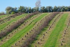 Cemitério das árvores Imagem de Stock Royalty Free