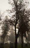 Cemitério de Mountview na névoa da manhã Imagens de Stock Royalty Free