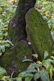 Cemit?rio judaico velho em Dukla imagem de stock royalty free