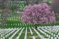 Cemitério nacional de Arlington com Cherry Blossom e a GR bonitos imagem de stock royalty free