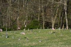 Cemitério no hospital mental foto de stock