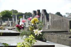 Cemiterio gör Caju Arkivfoto