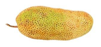 Cempedak Fruit II. Artocarpus integer, commonly known as cempedak, a fruit native to South East Asia region stock image