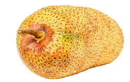 Cempedak Fruit V. Artocarpus integer, commonly known as cempedak, a fruit native to South East Asia region royalty free stock photo