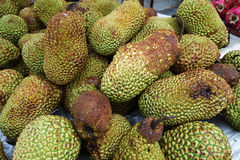 Cempedak is a kind of jack fruit. Also known scientific name as Artocarpus Integar Royalty Free Stock Photos