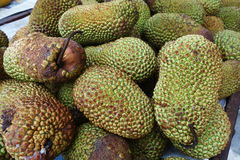 Cempedak is a kind of jack fruit. Also known scientific name as Artocarpus Integar Stock Photography