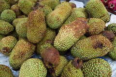 Cempedak is a kind of jack fruit. Also known scientific name as Artocarpus Integar Stock Photo