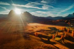 Cenário aéreo do nascer do sol do outono com larício amarelos e o alpi pequeno Fotos de Stock