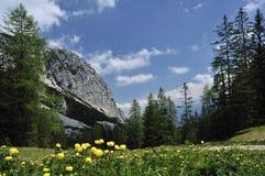 Cenário alpino Imagem de Stock