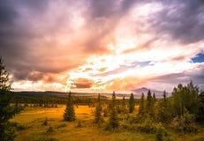 Cenário bonito com floresta do pântano e um céu bonito Fotografia de Stock