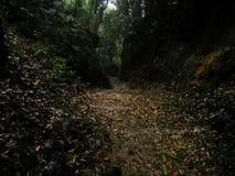 Cen?rio bonito da floresta nas madeiras fotografia de stock