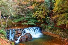 Cenário bonito de uma cachoeira bonita que cai abaixo de um córrego rochoso com folha colorida do outono foto de stock royalty free
