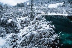 cenário bonito do inverno na fonte pura de Zelenci do lago no nascer do sol nebuloso, Kranjska Gora, Eslovênia Fotos de Stock Royalty Free