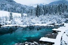 Cenário bonito do inverno no lago puro Zelenci no nascer do sol nebuloso, Kranjska Gora, Eslovênia Fotografia de Stock Royalty Free