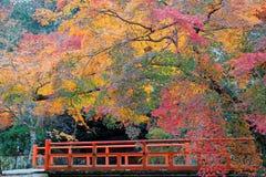 Cenário bonito do outono de árvores de bordo coloridas por uma ponte vermelha em Kyoto, Japão Imagem de Stock
