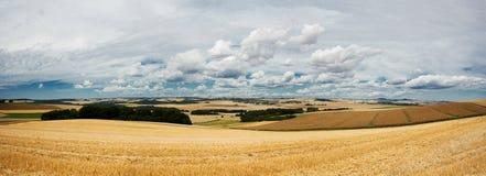 Cenário bonito do verão com campos do centeio Fotos de Stock