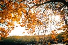 Cenário bonito, dourado do outono com árvores e folhas douradas imagem de stock royalty free