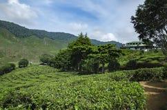 Cenário bonito em Cameron Highlands, Malásia com a plantação de chá verde da natureza perto do monte fotografia de stock royalty free