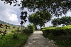 Cenário bonito em Cameron Highlands, Malásia com a plantação de chá verde da natureza perto do monte imagens de stock