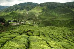 Cenário bonito em Cameron Highlands, Malásia com a plantação de chá verde da natureza perto do monte imagem de stock
