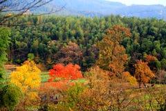 Cenário colorido do outono em Tachuan Imagem de Stock Royalty Free
