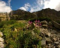 Cenário com flores e rochas Fotos de Stock