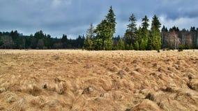 Cenário com grama e floresta imagens de stock royalty free
