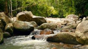 Cenário da floresta úmida e do rio com rochas Selva tropical profunda da floresta com as árvores sobre o córrego rochoso rápido vídeos de arquivo