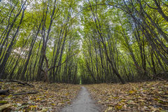 Cenário da floresta com raios da luz morna Imagens de Stock
