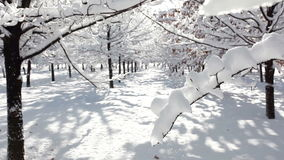 Cenário da floresta do inverno filme