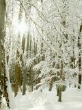 Cenário da floresta do inverno em raias do sol da manhã foto de stock royalty free
