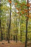 Cenário da floresta do outono com a estrada das folhas da queda Passeio na natureza da floresta do outono da cena imagem de stock