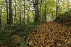 Cenário da folhagem de outono Foto de Stock