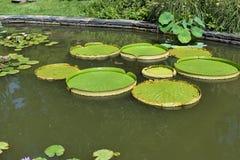 Cenário da lagoa do jardim Imagens de Stock Royalty Free