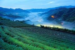 Cenário da manhã de jardins de chá no crepúsculo azul profundo antes do alvorecer com luzes bonitas da vila no vale imagem de stock