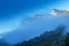 Cenário da montanha com pinheiros pretos Fotos de Stock