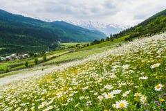 Cenário da montanha da flor em Geórgia Foto de Stock Royalty Free