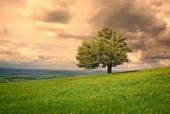 Cenário da natureza da árvore Fotografia de Stock Royalty Free
