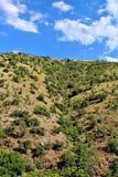 Cenário da paisagem entre Sedona e Jerome, Maricopa County, o Arizona, Estados Unidos fotografia de stock royalty free