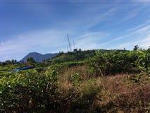 Cenário da plantação de chá em Bogor, Indonésia Fotografia de Stock Royalty Free