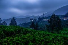 Cenário da plantação de chá na noite foto de stock royalty free