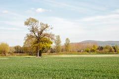 Cenário da primavera no campo inglês Imagem de Stock Royalty Free