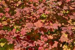 Cenáriode AutumnImagem de Stock Royalty Free