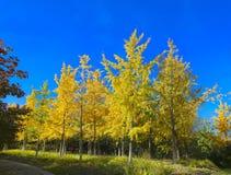 Cenáriode AutumnImagens de Stock Royalty Free