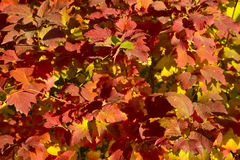 Cenáriode AutumnImagem de Stock